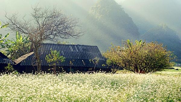 Đến Sơn La vào mùa nào đẹp nhất?
