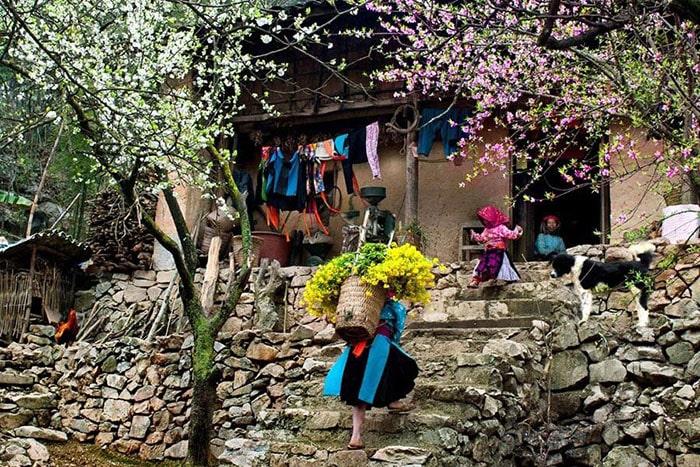 Mùa hoa đào, hoa mận ở Hà Giang