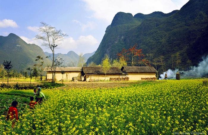Mùa hoa cải Hà Giang nở vào khoảng tháng 11-12