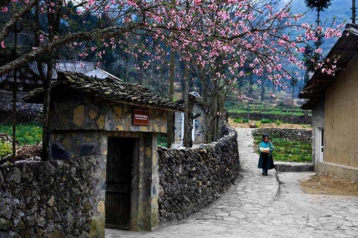 Mùa hoa đào ở Hà Giang