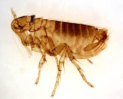 Bảo vệ bản thân khỏi côn trùng cắn khi đi phượt