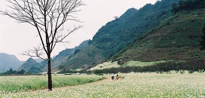 6 địa điểm ngắm hoa tam giác mạch đẹp không kém Hà Giang