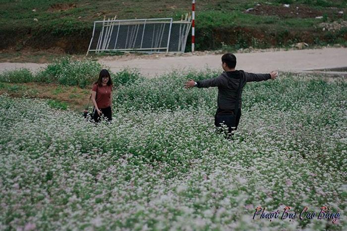 Mùa hoa tam giác mạch ở Cao Bằng thường kéo dài khá lâu