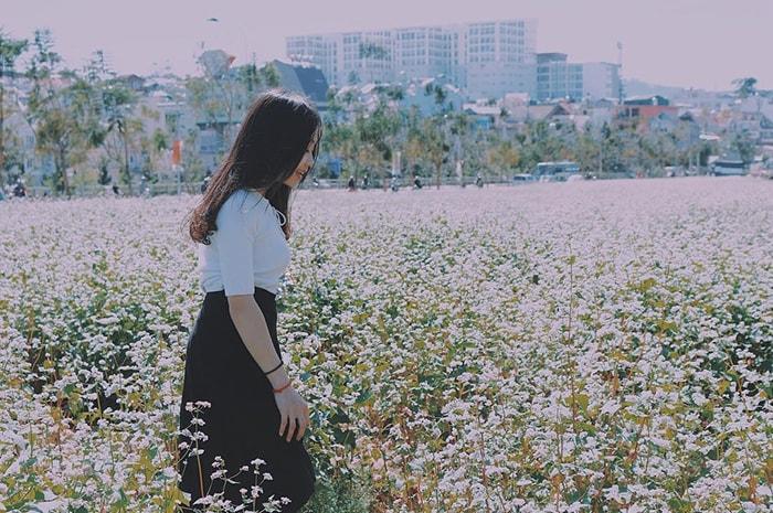 Cánh đồng hoa tam giác mạch ở Ấp Ánh Sáng, Đà Lạt