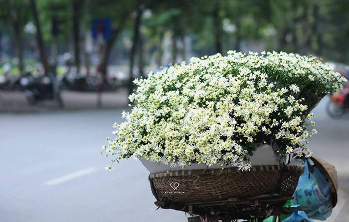 Những bó cúc họa mi được bán khắp trên các con phố ở Hà Nội