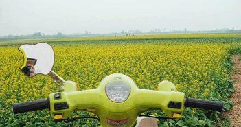 Ngoài tam giác mạch, còn mùa hoa nào khác nở vào cuối năm?