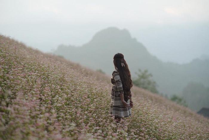Cánh đồng hoa tam giác mạch tuyệt đẹp ở Simacai