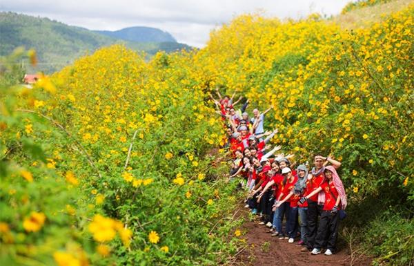 Phượt Đà Lạt những ngày cuối thu – Phần 1: Rực vàng màu hoa Dã Quỳ