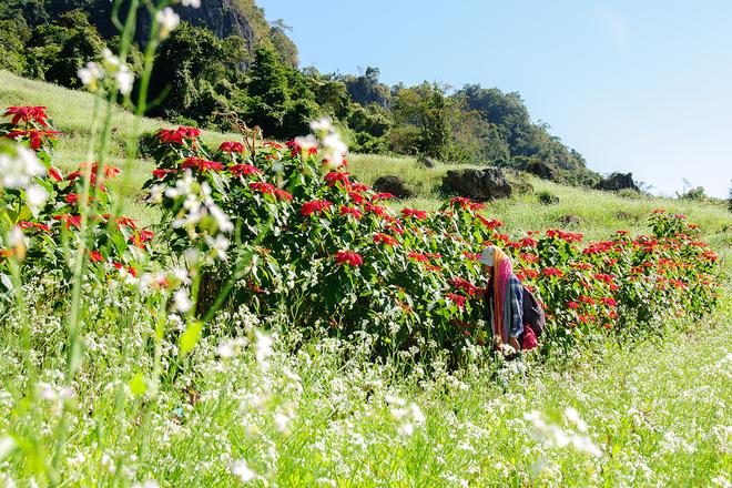 Sau tam giác mạch, còn mùa hoa nào khác nở vào cuối năm?
