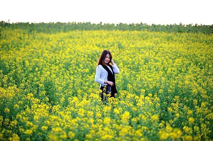 Cánh đồng hoa cải vàng ở gần Học viện Nông Nghiệp