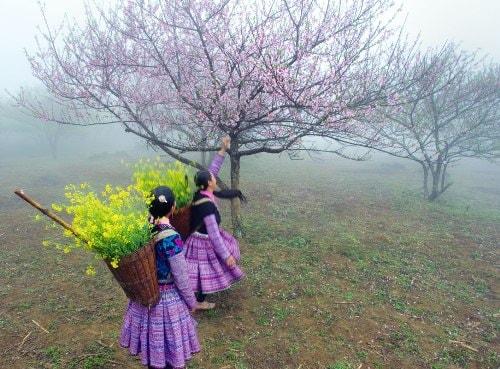 Kinh nghiệm phượt Mộc Châu mùa hoa cải