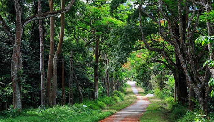 Thăm vườn quốc gia Ba Vì, Hà Nội