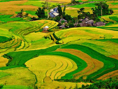 6 cánh đồng khiến bạn thêm yêu miền Bắc