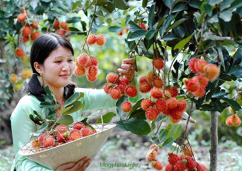 Miệt vườn Long Khánh là địa điểm dã ngoại khá thú vị ở Đồng Nai