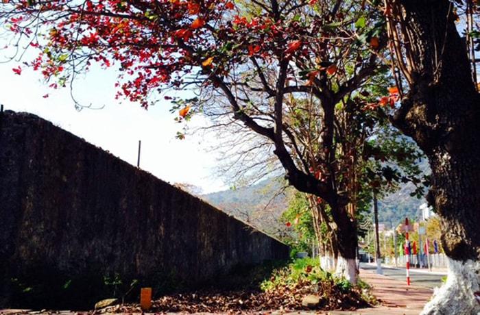 Chiêm ngưỡng mùa bàng thay lá ở Côn Đảo