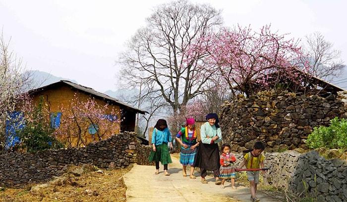 Mùa xuân trên cao nguyên đá Đồng Văn