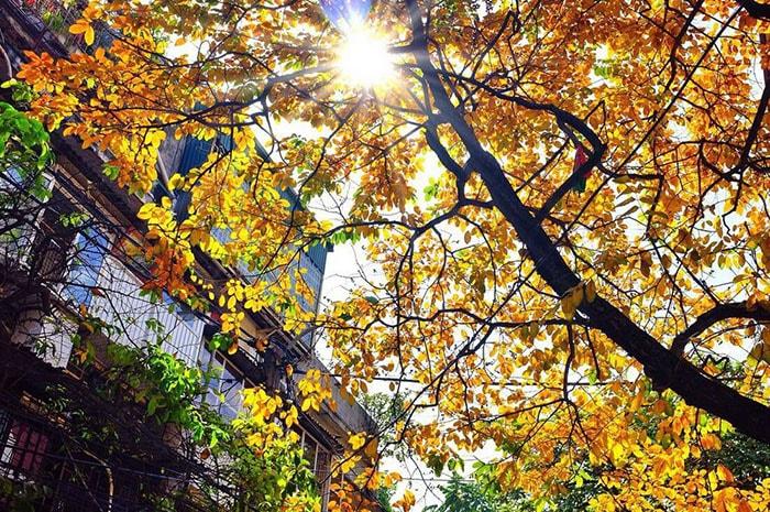 Hà Nội mùa thu tháng 8