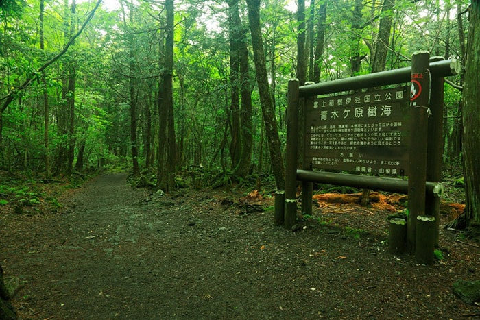 Khu rừng tự sát Aokigahara, Nhật Bản