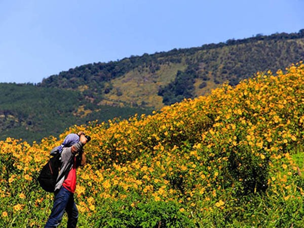 Cung đường nhiều hoa dã quỳ ở Đà Lạt