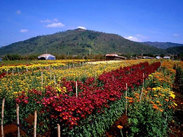 Ghi dấu kỷ niệm với những bức ảnh đẹp giữa ngàn hoa