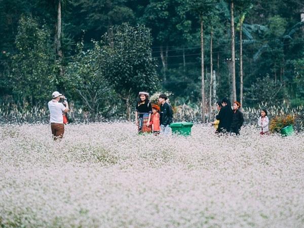 Tháng 11 đi đâu : Lên Hà Giang, Mộc Châu hay vào Đà Lạt ?