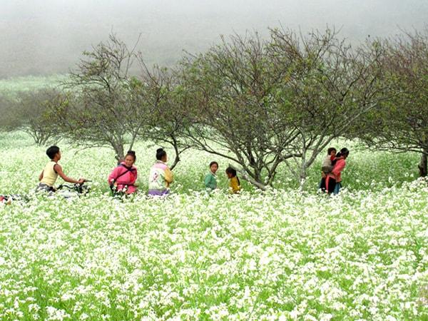Phượt Mộc Châu mùa cải trắng