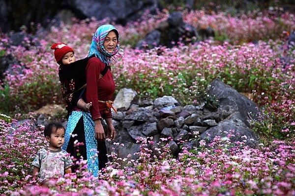 Phượt Hà Giang ngắm hoa tam giác mạch