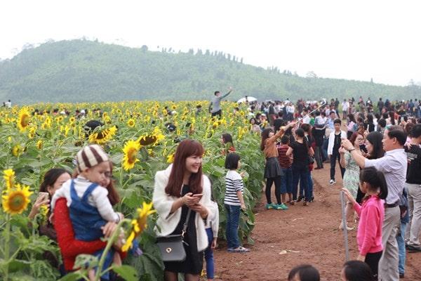 Giới trẻ lại rục rịch đi săn hoa hướng dương Nghệ An