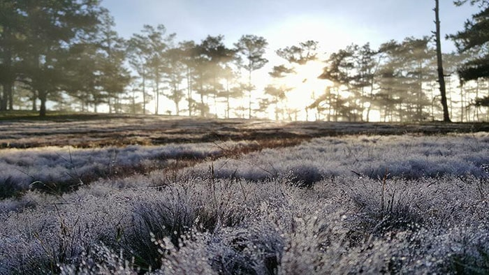 Đồi cỏ tuyết ở Đà Lạt