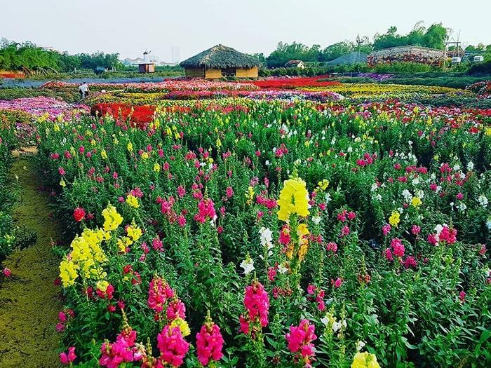 Chụp ảnh Tết ở thung lũng hoa Hồ Tây