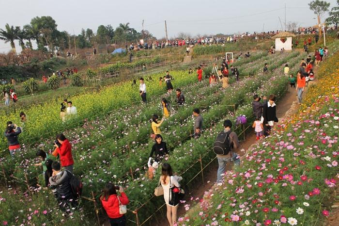 Chụp ảnh Tết ở vườn đào Nhật Tân