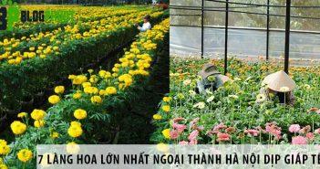 7 làng hoa lớn nhất ngoại thành Hà Nội dịp giáp Tết