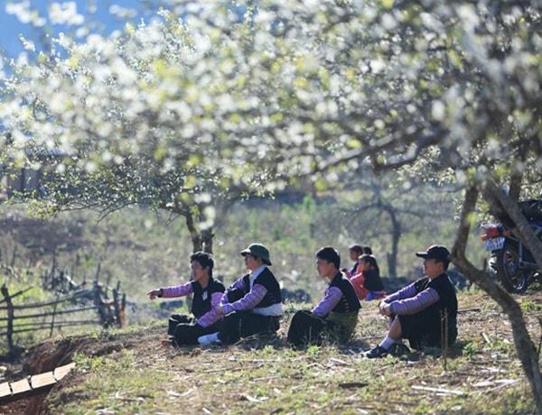 Phượt Mộc Châu ngắm hoa mận hoa đào