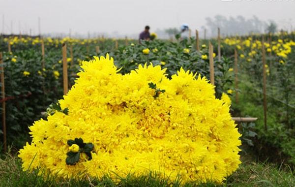 Làng hoa Nghi Tàm