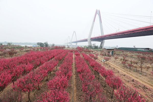 Làng hoa Phú Thượng
