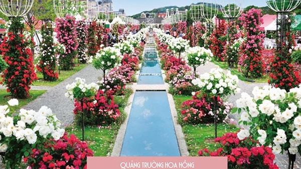 Quảng trường hoa hồng