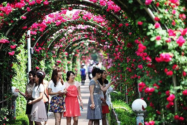 Lễ hội hoa hồng Bulgaria tại Hà Nội