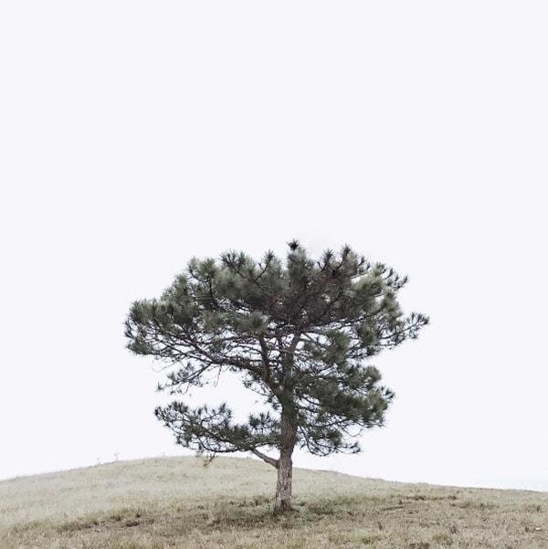 Cây thông cô đơn trên Đồi Thiên Phúc