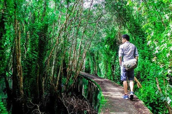 Con đường xi măng xuyên rừng tràm