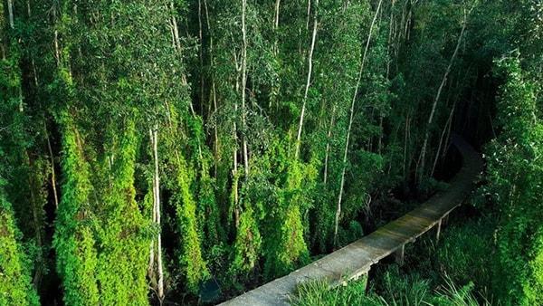 Làng nổi Tân Lập với rừng tràm cổ thụ xanh bát ngát