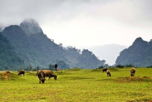 Cánh đồng cỏ Tân Hóa, nơi quân đội Mỹ chuẩn bị giao chiến Kong trong phim