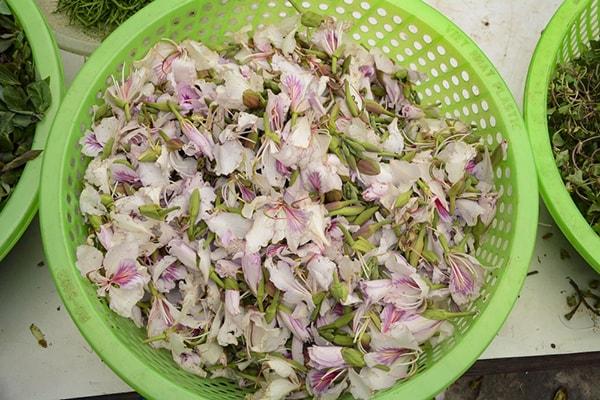 Món ăn từ hoa ban được dùng để tiếp đãi khách quý