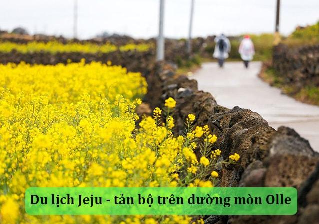 Du lịch Jeju Hàn Quốc tản bộ trên đường mòn Olle