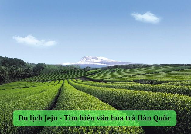 Tìm hiểu văn hóa trà Hàn Quốc khi du lịch Jeju Hàn Quốc