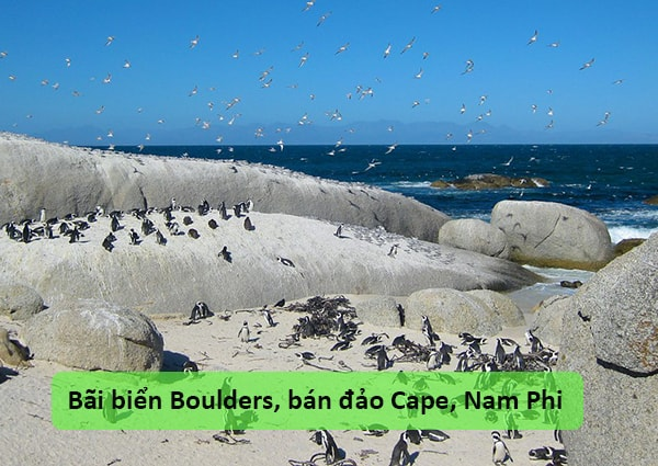 Bãi biển Boulders, bán đảo Cape, Nam Phi