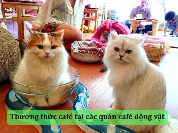 Thưởng thức café tại các quán café động vật
