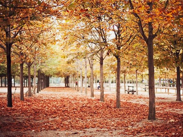 Du lịch nước Pháp vào mùa thu