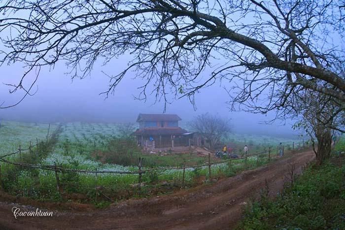 Bản Pa Phách một sáng sương mờ