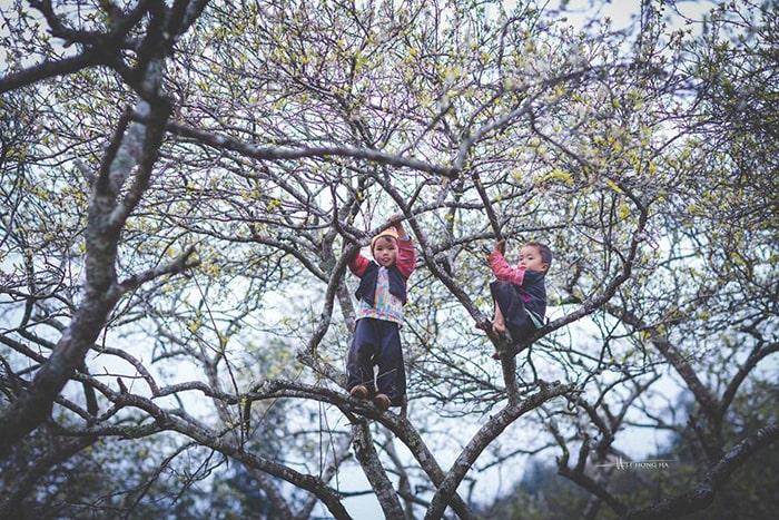 Bản Phiêng Cành mùa hoa mận