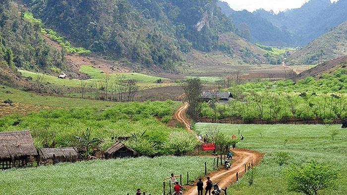 Con đường ngập tràn hoa cải ở bản Thung Cuông